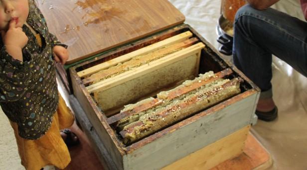 permaculture enfant apiculture