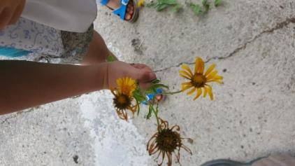 permaculture enfant botanique