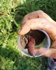 permaculture enfant insectes