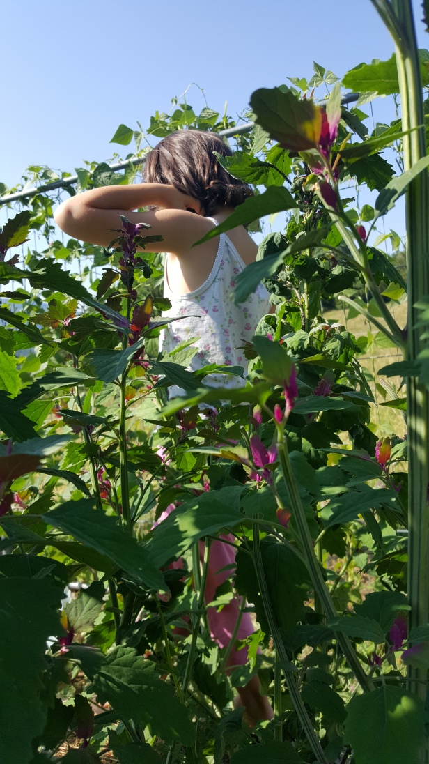 permaculture enfant jardin