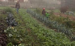 permaculture enfant maraichage