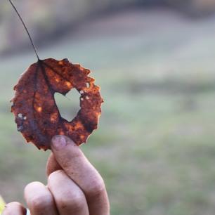permaculture enfants ados amour de la nature