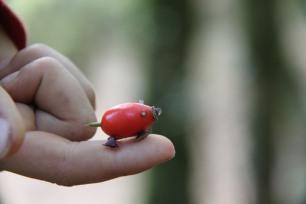 permaculture enfants ados jouet de plantes