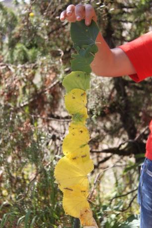 permaculture enfants ados land art
