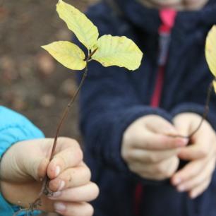 permaculture enfants ados pousses